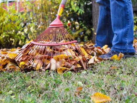 Grenzbepflanzung, Laub rechen im Garten, Foto: shootingankauf/fotolia.com