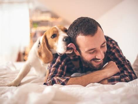 Haustiere, Mietwohnung, Hund, Foto: AlexandarNakic/iStock