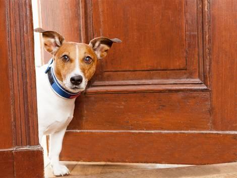 Hund guckt aus Fenster, Einbruchschutz, Wachhund, Foto: Javier Brosch/fotolia.com