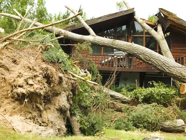 Gebäudeversicherung, Baum ist auf Hausdach gestürzt, Foto: iStock/AlpamayoPhoto